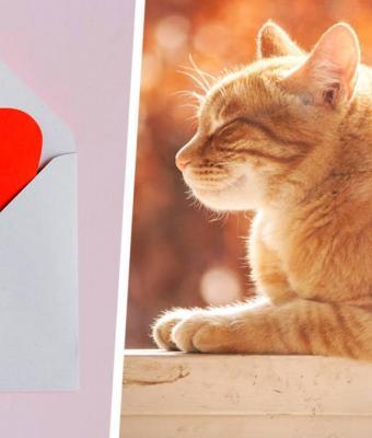 Парень сделал квест для девушки и растопил сердечки людей, но дело не в награде. Найти приз помог кот