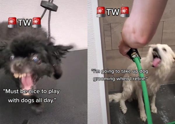 Девушка показала на видео, как стрижёт собак, и ей вовсе не весело. Люди в шоке от грязной работы