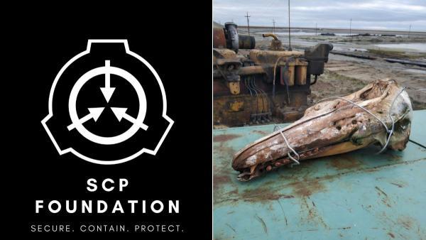 Исследователь нашёл череп странного существа на Севере в воде. А фаны The SCP Foundation дали чудищу номер