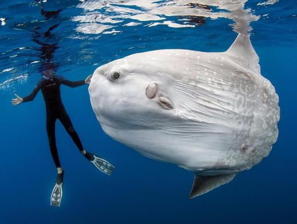 Людей напугал морской монстр, и они вызвали копов. Те проверили и теперь не берут трубки. Но виновата не рыба