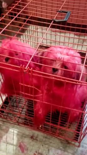 Хозяйка стала свидетелем настоящего щенячьего хоррора. Но не пугайтесь - они просто оценивали её косметику