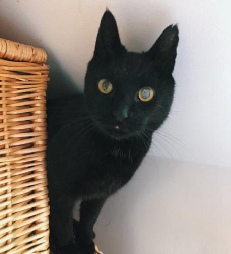 Кота поместили в приют на время, но тот не понял и начал действовать. Найти его удалось лишь через восемь лет