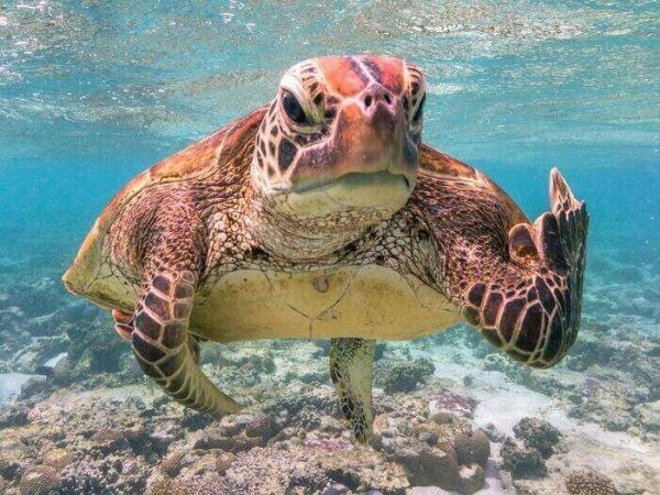 Парень сфотографировал морскую черепаху и не прогадал. Теперь это самый смешной снимок 2020 года