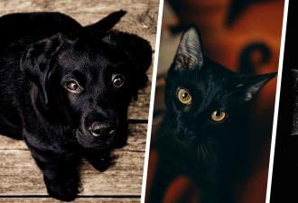 Девушка объяснила, почему чёрных кошек и собак нельзя отдавать в октябре. И оскорбила чувства сатанистов