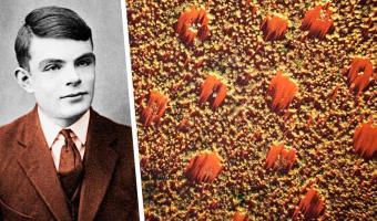 Люди годами ломали головы над аномальными «кругами фей» в Австралии. Но ответ учёных развеял всю мистику