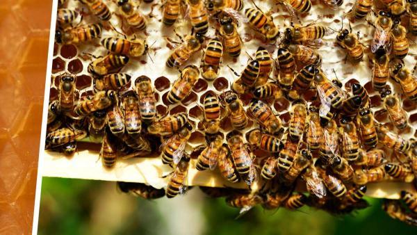 Парень усыпил бдительность людей, нарезая пчелиные соты под музыку. А в конце вызвал у зрителей тошноту