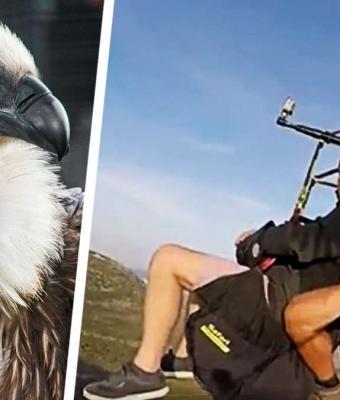 Стервятник сел на селфи-палку к парашютистам, и люди напуганы. Они верят: птица задумала съесть парней на ужин
