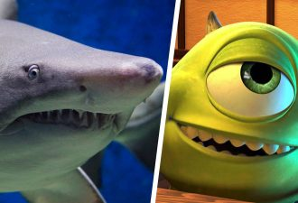 Рыбак показал акулу — символ 2020 года. У неё тоже странное всё: от цвета кожи до глаза Майка Вазовски