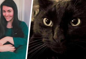 Кота поместили в приют на время, а тот не понял и начал действовать. Найти его удалось лишь через восемь лет