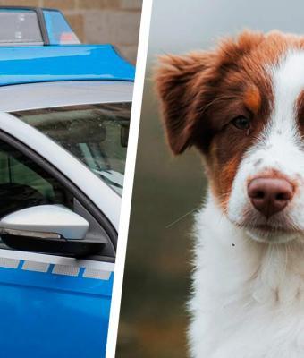 Семья два дня искала собаку и вызвала полицию. Оказалось, всё это время пёс был у их ног — буквально