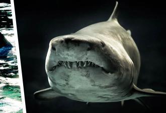 Учёные поймали акулу-монстра — самую крупную девочку в океане. Но оказалось, «Челюсти» всё сильно преувеличили
