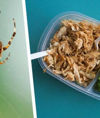 Девушка обедала, но трапезу прервал паук-гигант. Крик сменился на смех, когда она разглядела его поближе