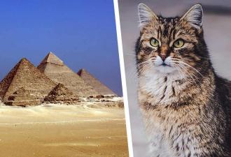 Учёный вскрыл египетскую гробницу и стал жертвой проклятья. Его не пожелаешь и врагу — парня презирают котики