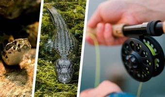 Дедка — за леску, леска — за аллигатора, аллигатор — за анаконду. Это не новая «Репка», а рыбалка в 2020-м