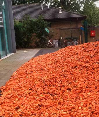 Университет за утро утонул в тоннах моркови. Нет, это не протест фермеров или свалка, а современное искусство