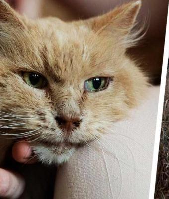 Кот вернулся к хозяевам спустя три года после побега. Однако семья уверена: это не чудо, а привет с того света