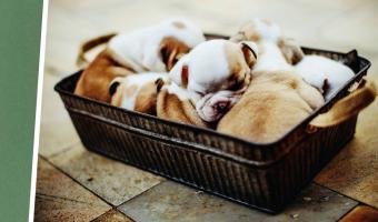 Собака родила наполовину щенка, наполовину фисташку. Дело в шерсти пёселя, и плохая экология тут ни при чём