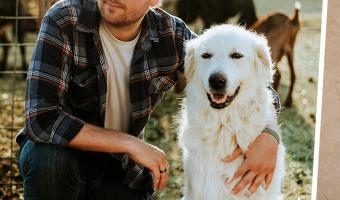 Ветеринар показал, почему нельзя гладить бездомных собак. В его видео хоррора больше, чем у Хичкока