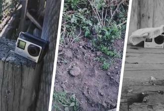 Дачник оставил камеры в огороде и поймал вора. Кадры его удивили, но он нашёл способ поразить жулика в ответ