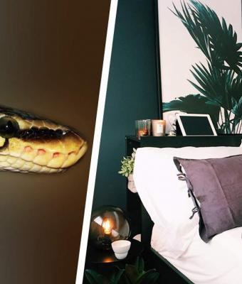 Комната кишит пауками и змеями, но это не ловушка для Индианы Джонса. Такую детскую захотела себе восьмилетка