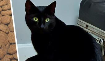 Охранник подкармливал бездомную кошку, пока не узнал о ней правду. Даже котейкам есть что скрывать