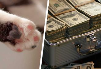Клиент шёл в банк и стал свидетелем ограбления. Но бандитам ничего не будет, ведь кроме масок у них были лапки
