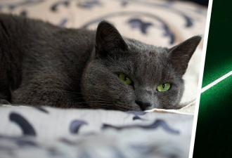 Мы думали, что заставляем глупых котов бегать за лазером, но те скрывали правду. Похоже, это они играют с нами