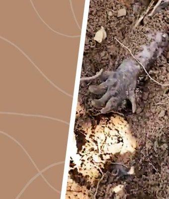 Из песка на видео торчат руки-лапы, но пугаться не стоит. Их владелец — очаровашка на ножках (мемный)