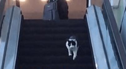 Кот решил спуститься на эскалаторе, но сэкономить силы не удалось. На спуск он потратил одну из девяти жизней