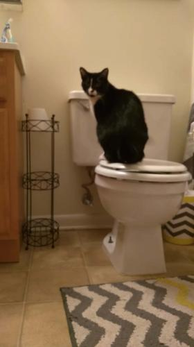 Кот спустил деньги хозяина