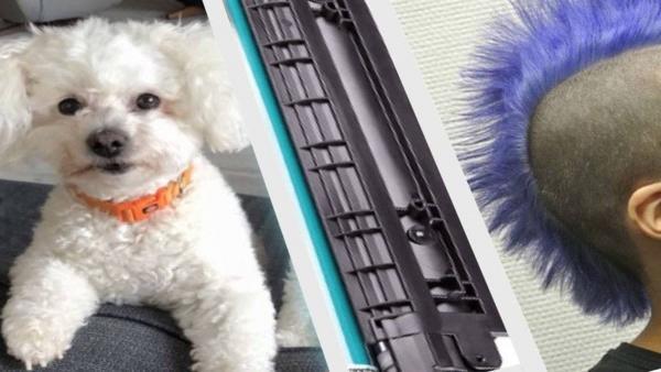 Хозяйка радовалась милой стрижке пса, но недолго. Пёсель был бунтарём и показал это своим новым цветом шерсти