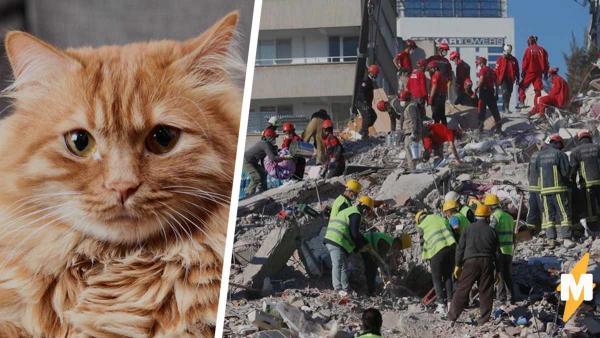 Хозяева оплакивали кота, оставшегося в рухнувшем доме. Как же они удивились, когда разобрали обломки
