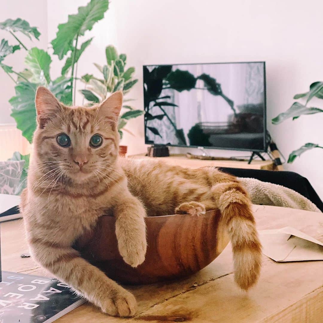 Хозяйка не знала, как кот ей манипулирует, пока не увидела его глаза. Подчинять людей он научился у лучшего