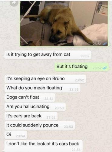 Мать убеждала дочь избавиться от найденного пса, но та лишь смеялась. Собака существовала лишь в цифровом мире