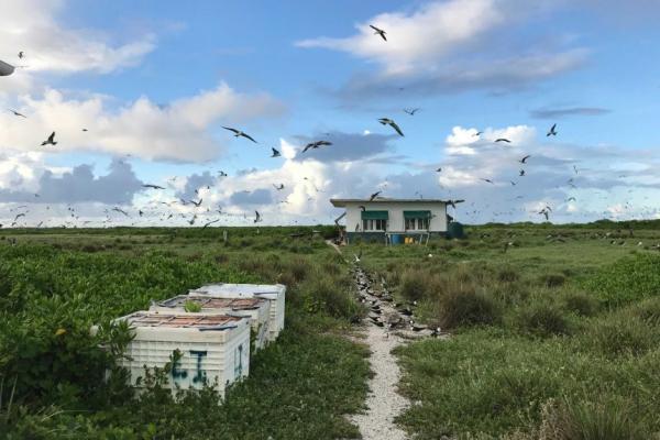 Путешественники попали на запретный остров и мечтают вернутся