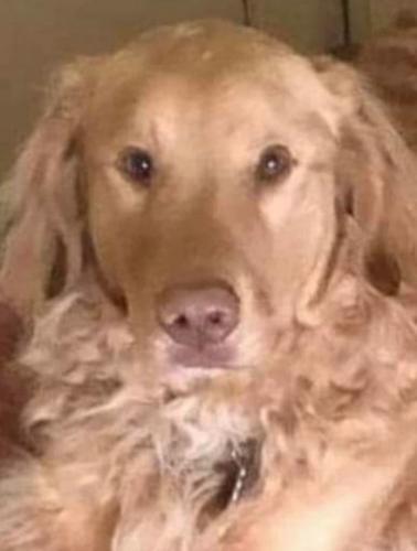 Хозяйка потеряла пса в лесу, но не опустила руки. Через год он доказал, что собачья верность способна спасти