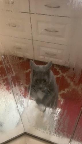 Девушка всегда думала, что кот хочет спасти её из душа. Зря - нелепые жесты питомца говорили совсем о другом