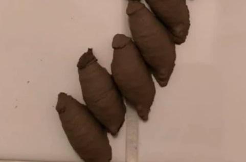Хозяйка увидела странные коконы в ванной и решила: пауки. Эта маленькая ошибка чуть не стоила ей жизни и дома