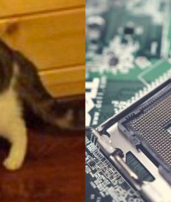 Владелец игрового ПК показал, как использует центральный процессор. Он чешет им кота, и на это больно смотреть