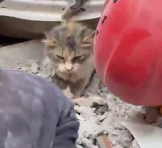 Семья потеряла в землетрясении кота и оплакивала его. Но стоило раскопать обломки, горе сменилось удивлением