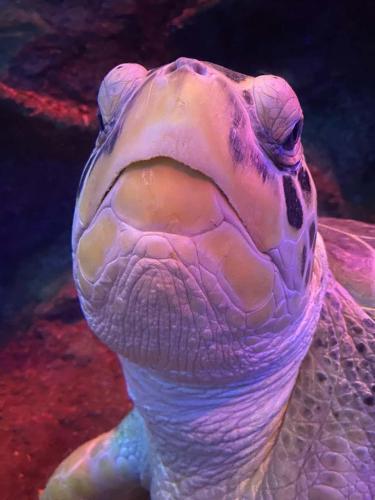 Работники океанариума взвесили черепаху и остолбенели.