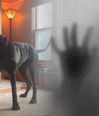 Хозяева столетнего особняка услышали вой своей собаки. Посмотрев записи с камер, они решили сменить жильё