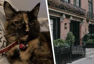 Кошка Ки-Ки заставляет краснеть хозяйку каждый день. А как иначе, когда хобби питомца лишает соседей святого