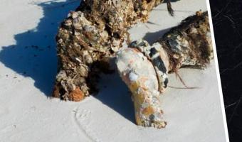 Волонтёр гуляла по пляжу и обнаружила тело. Испуг сменился смехом, когда она поняла, что нашла на самом деле