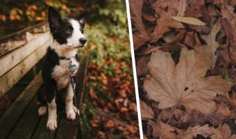 Пропавшая собака 10 дней блуждала в лесу, и люди почти потеряли надежду. Но её спас один пост на Reddit
