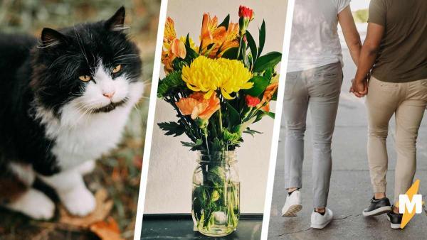 Девушка показала фото кота и сломала людей. Ведь на снимке пушистого котейки они видят двух целующихся парней