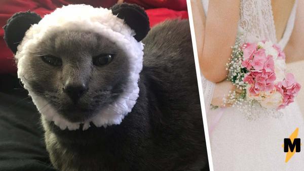 Девушки запретили парню приходить на их свадьбу из-за кота.