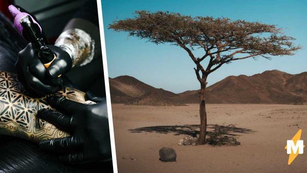 Парень хотел набить тату с красивым деревом и сфейлился. Придя к друзьям, он понял, что косплеил консервы