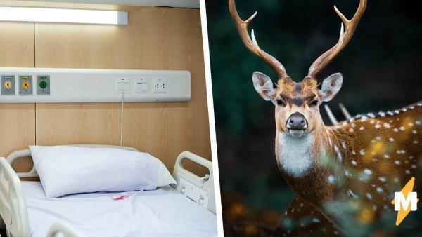 Чудак стал считать себя оленем и оказался в больнице. Беды с башкой ни при чём - просто ему поверили охотники