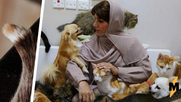 Женщина не любила животных, а сын подарил ей кота. И узнал маму с новой стороны - теперь с ней живут 500 кошек